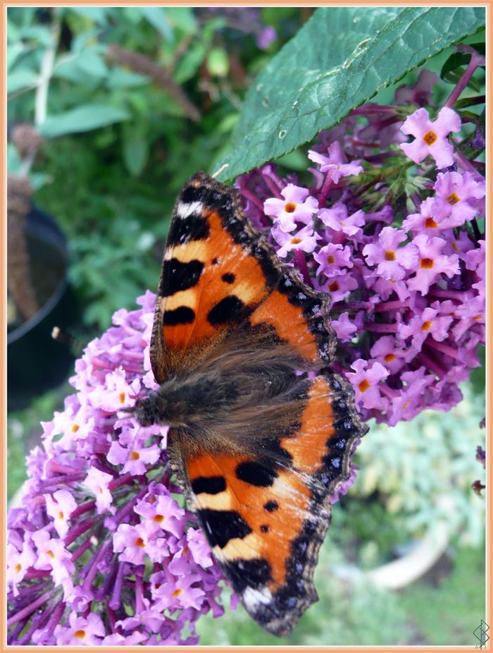 More Flutterby by AranwA-Tari