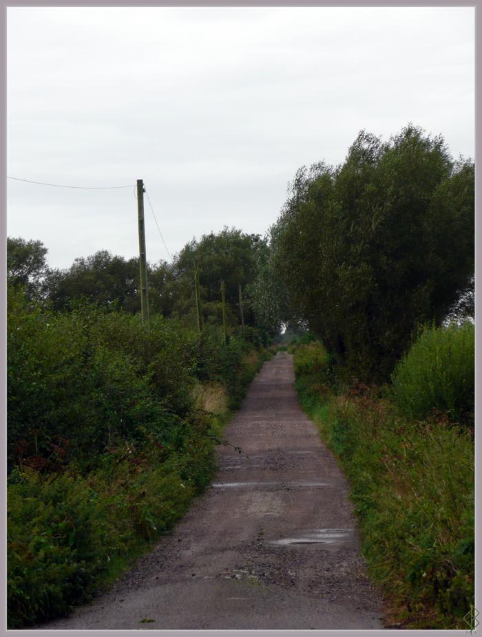 Country Lane by AranwA-Tari