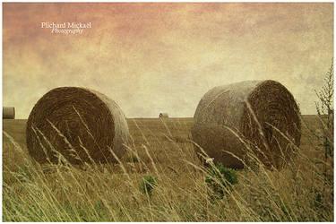 Field by MPlichard