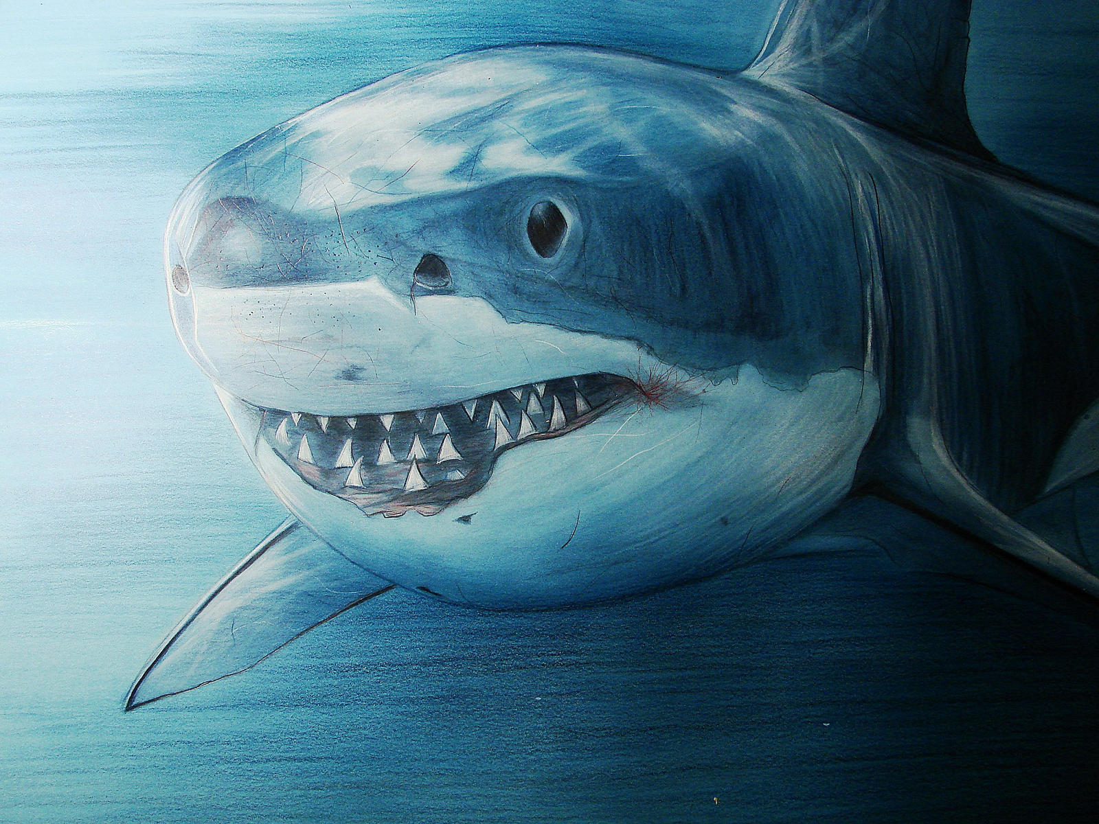 Great White Shark - Time for big Hunt by senioremanolito ...  Great White Shark Painting