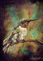 Hummingbird Study by airyfairyamy