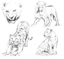 Feline sketchdump