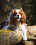Log Dog II by Sara-Roth