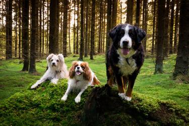 Trio by Sara-Roth