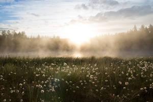 Foggy pond by Sara-Roth