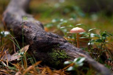 Little mushroom by Sara-Roth
