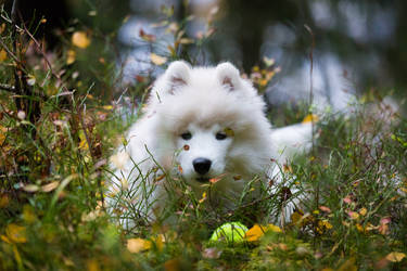 Autumn pup by Sara-Roth
