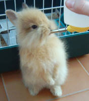 little rabbit by black-owl