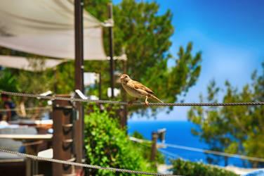 Little bird by chenvv