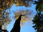 Las jesienia