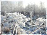 Winter's Tale 1