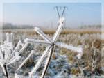 Winter's Tale 3