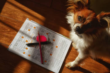 Cindy and the crossword