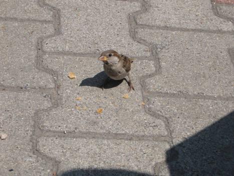 Sparrow A