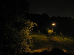 Angler fish lurks in a park