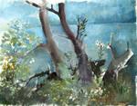 Trees by the river Nemunas