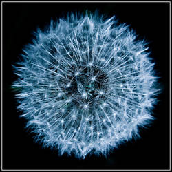 Blue flower by bejjs