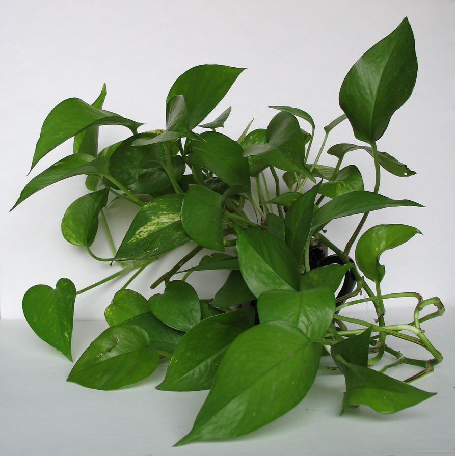plants02 by Holy-Win
