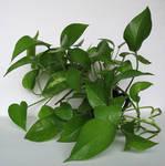 plants02