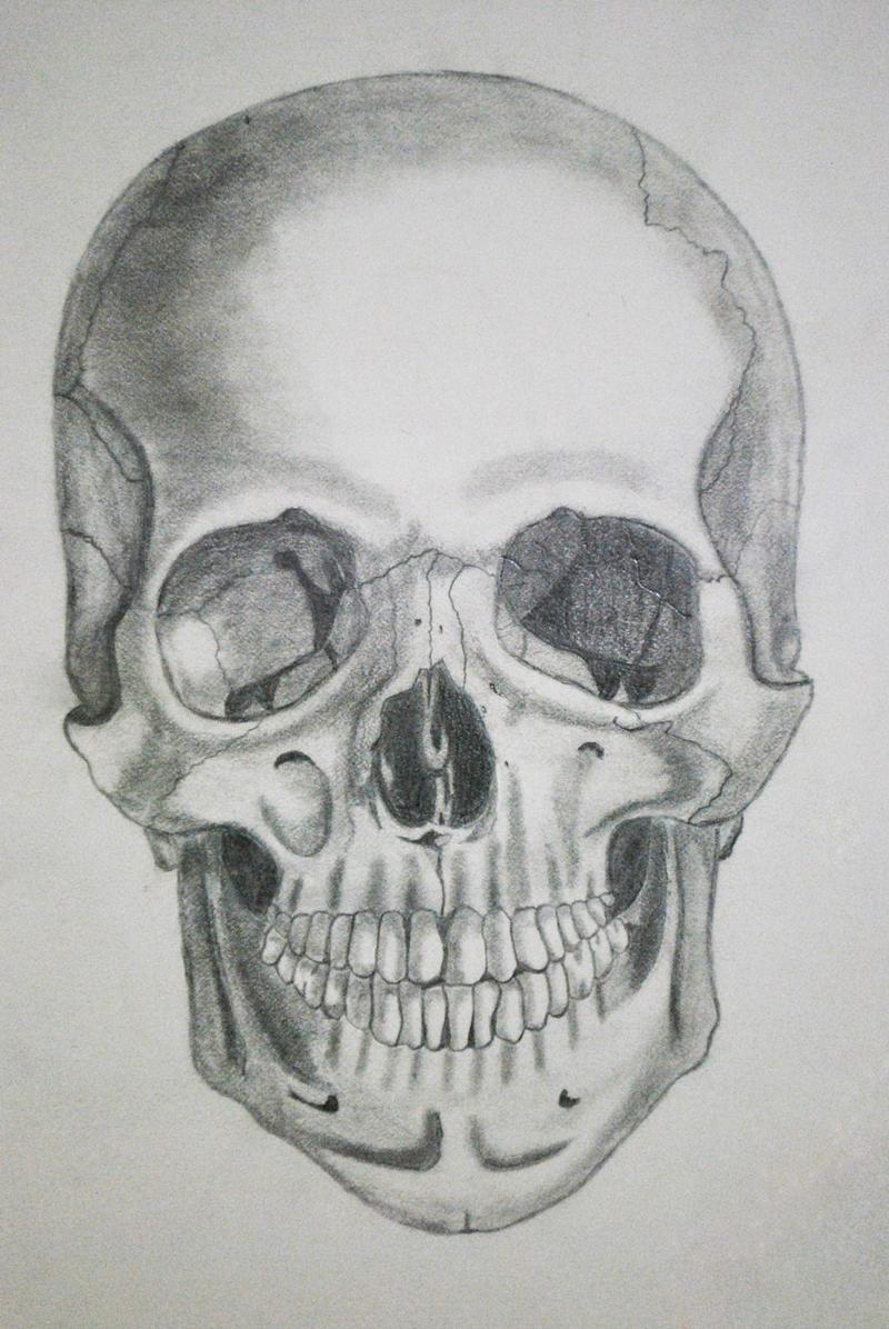 human skull by patricialois human skull by patricialois