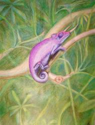 Crayon Chameleon by Chameleonperson