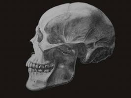 Skull by Chameleonperson
