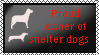 Proud owner of shelter dogs by xpekalx