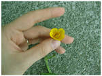 Buttercup by Red--Roses