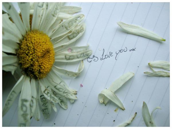 I Love You Flower