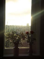 Flowers in the Wondow