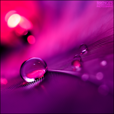 Purple slumber by Irrence