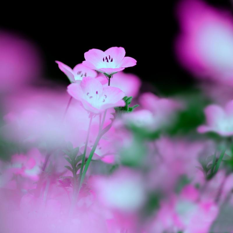 Spring by Shadowelve