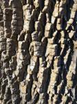 Tree Bark Face - Bridgeton Pennsylvania