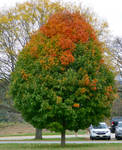 Orange Green Fall Tree -Valley Forge Pennsylvania