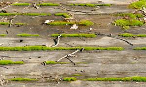 Moss In The Cracks - Durham Pennsylvania