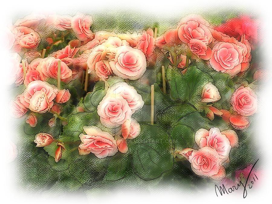 Begonias by IrysArt