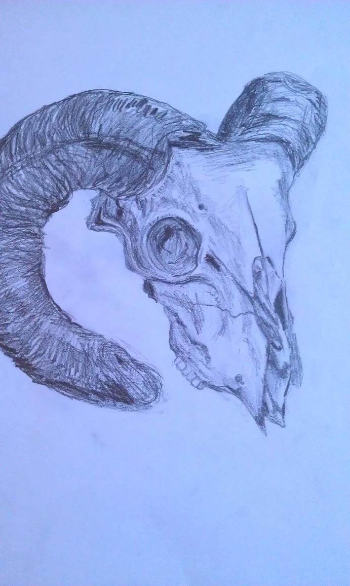 Skull still life by phoenixdoll