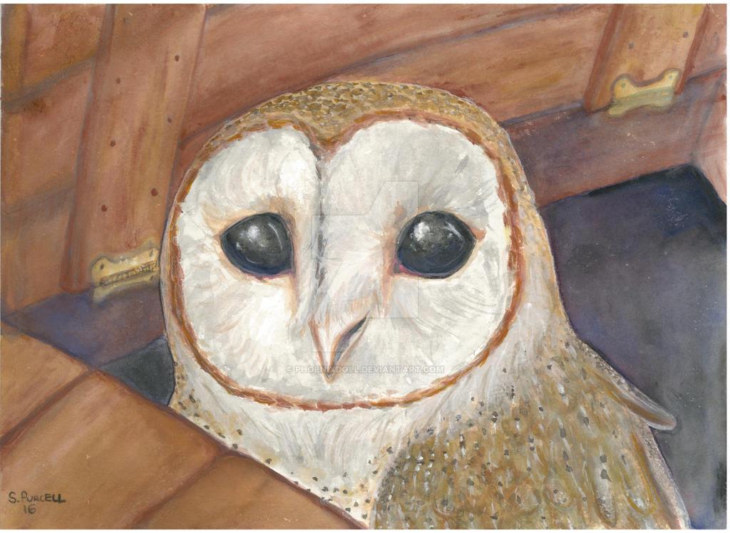 Trapdoor Owl