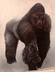 Male silverback gorilla by snakehands
