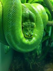 Snakey snake by Kalin-dax