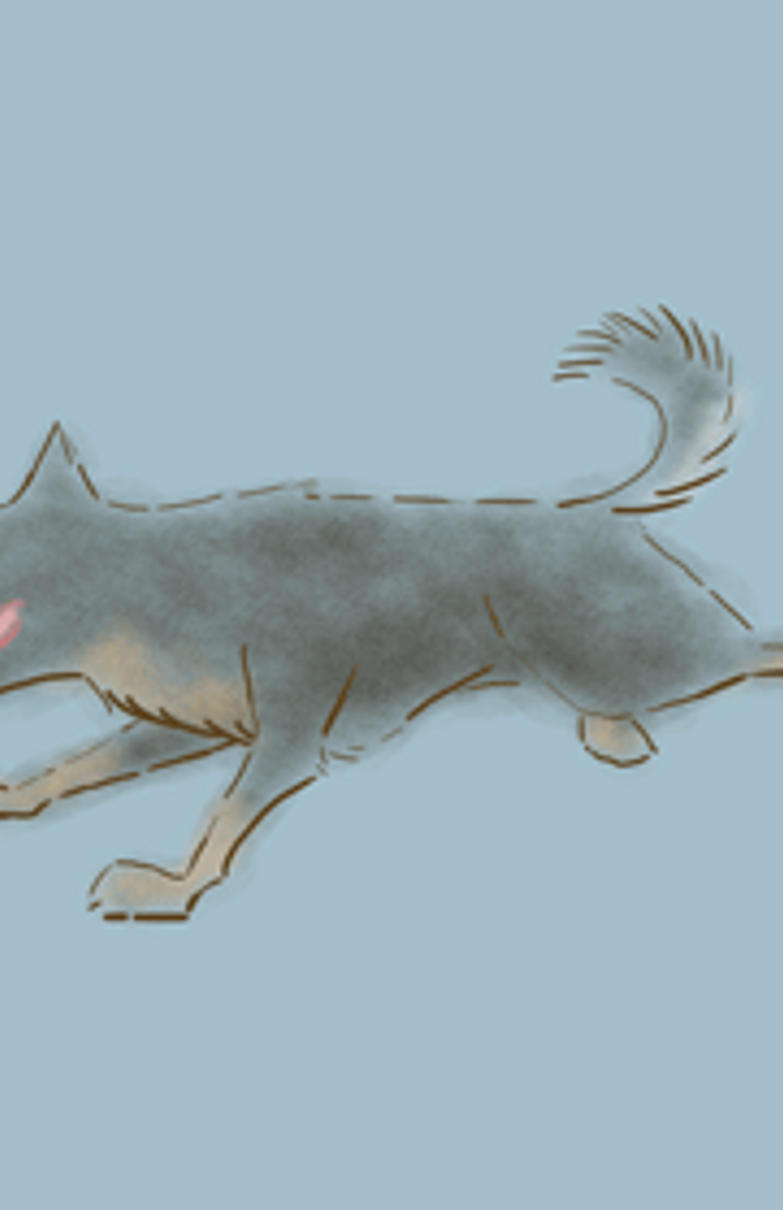 dog run animation wwwpixsharkcom images galleries