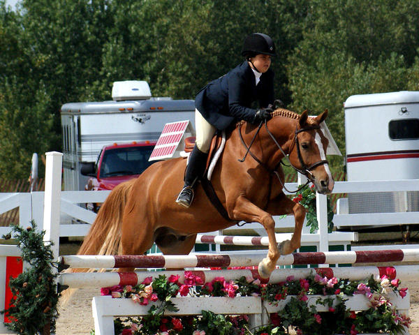 Jumping Chestnut Horse by kschneider on DeviantArt - photo#15