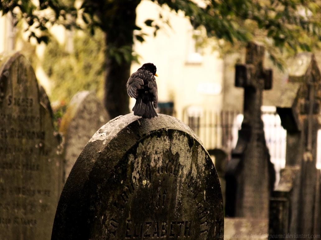 Black Bird Blues by dramaticpeanut