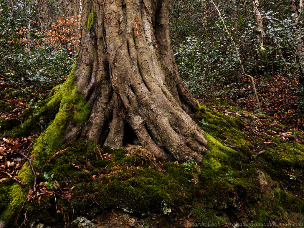 Mossy Roots by dramaticpeanut