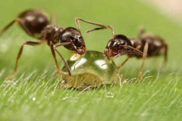 'The honey drop' by macrojunkie