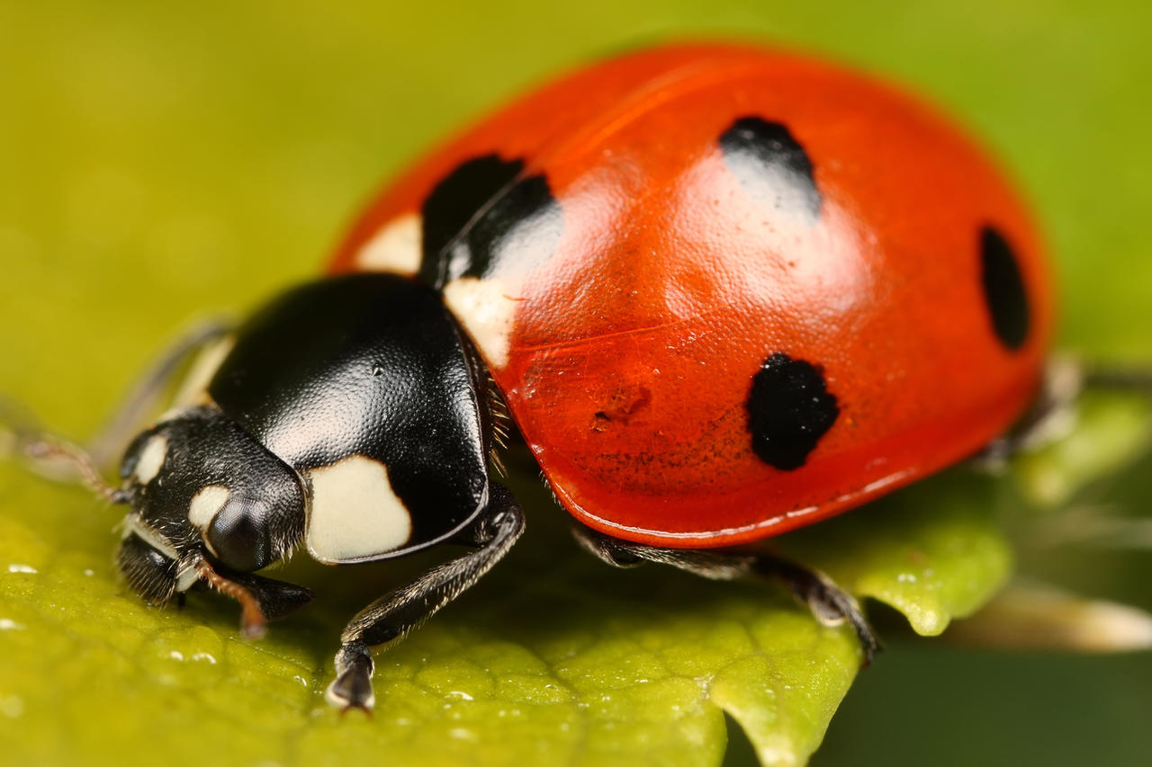 Ladybird Group    Car Seat