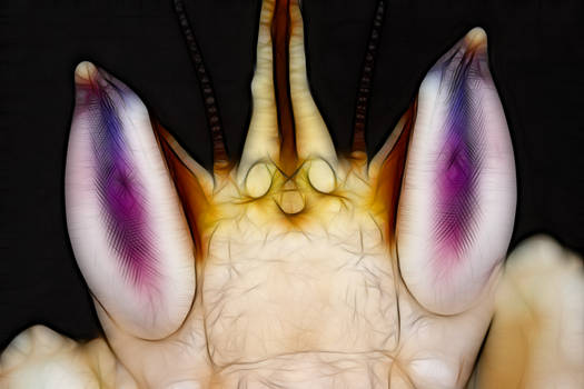 orchid mantis_1