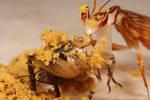 Feeding pollen to mantids _3 by macrojunkie