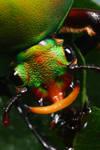 Flower beetle 7