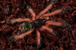 spider 2 by macrojunkie
